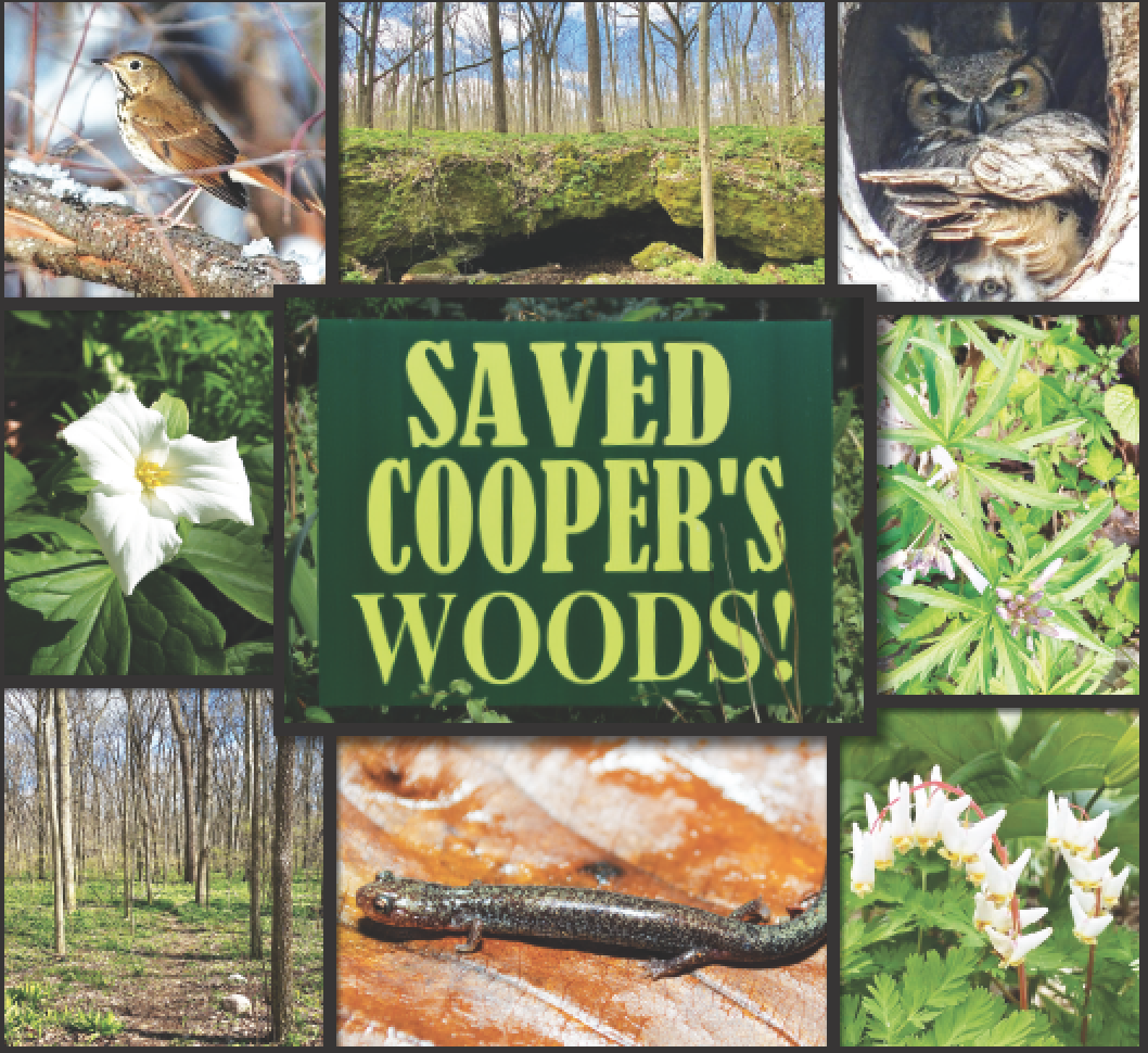 "Protecting Cooper's Woods saves not only the forest but rare animals, plants and topography. The woods contain at least two wild caves. One of them is Cedar Woods Cave III, pictured top center. Continuing clockwise is a Great Horned Owl, Cut-leaf Toothwort, Dutchman's Breeches, Lead Morph of the Eastern Red-Backed Salamander, ""Shady Path"" through Cooper's woods, Large-flowered Trillium and Hermit Thrush. The Bass Islands, including Cooper's Woods, are also a major flyway for migratory songbirds like the Hermit Thrush. - Owl photo courtesy of Sandy Funtal, salamander photo courtesy of Maggie Hantak and Kyle Brooks, songbird photo courtesy of Tom Bartlett, other photos courtesy of Susan Byrnes."